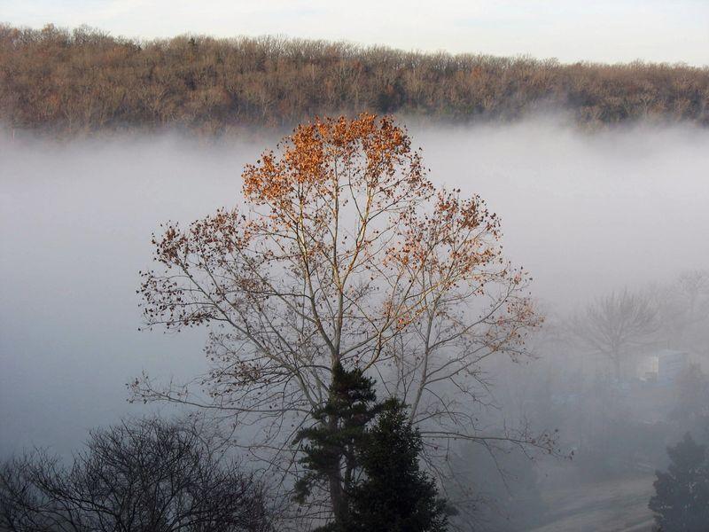 Cedar-fog