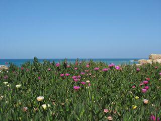 Caesarea-1