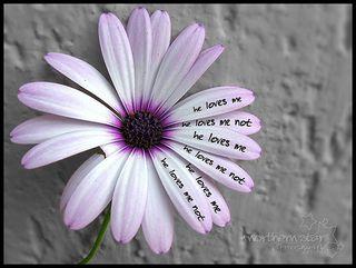 Loves-me-loves-me-not