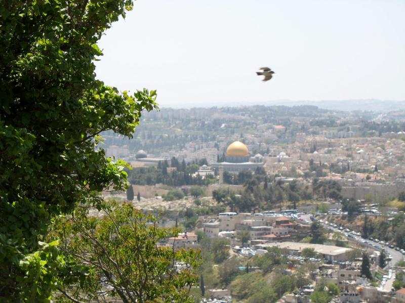 Jerusalem-dome-dove