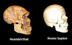 Neanderthal_skull_homo_sapiens_skull