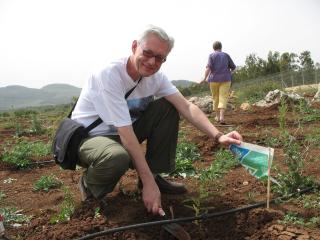 WDT-tree-Israel